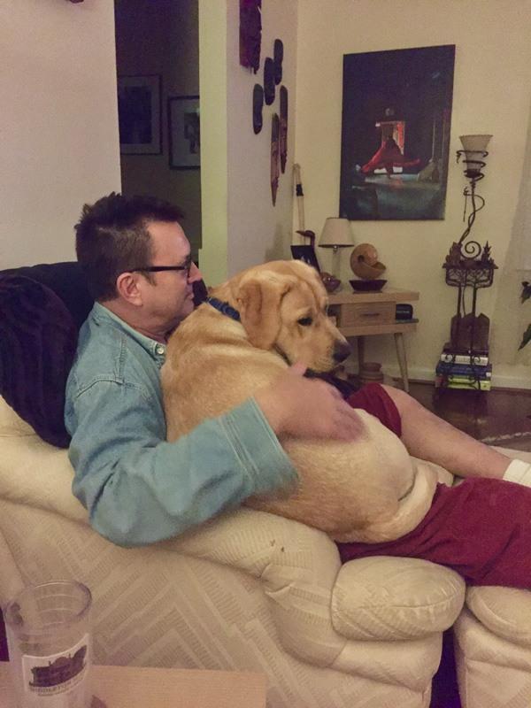 puppy palace lap dog