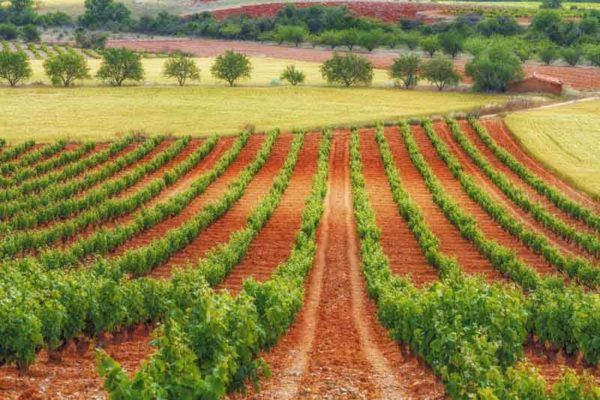 Cariñena Wine Region to Watch